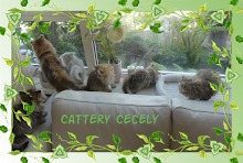 Cecely Cattery