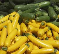 zucchini | courgette | summer squash | Cucurbita pepo