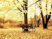 Campo en otoño y con una banca en medio de los arboles campo en otoã±o con una banca en medio de los arboles