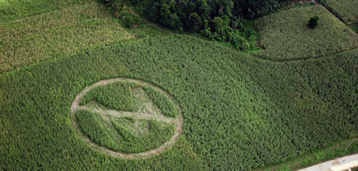 Greece Forbids Monstanto's Genetically Modified Corn