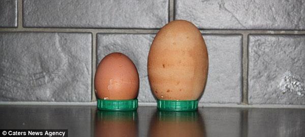 """بالفيديو والصور: من غرائب الطبيعة """"بيضة داخل بيضة"""""""