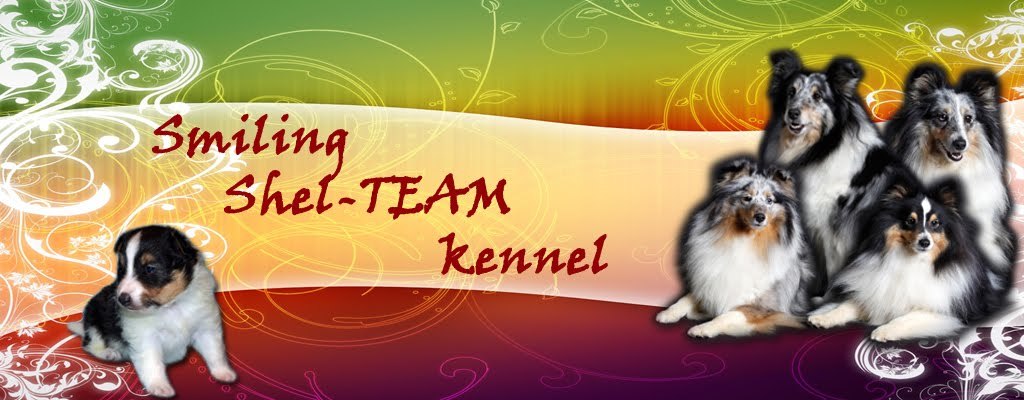 Smiling Shel-TEAM kennel