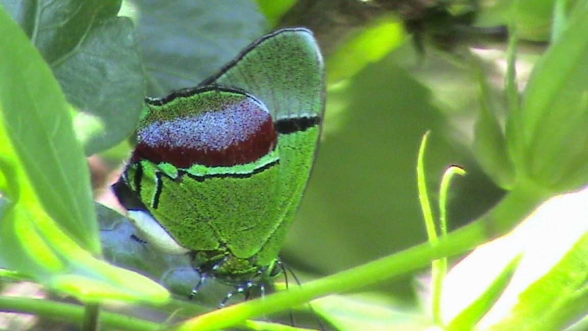 Ara as insectos y bichos del jard n for Insectos del jardin