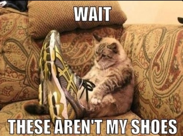 30 Funny animal captions - part 9, funny animal memes, funny animals, funny memes, animal pictures