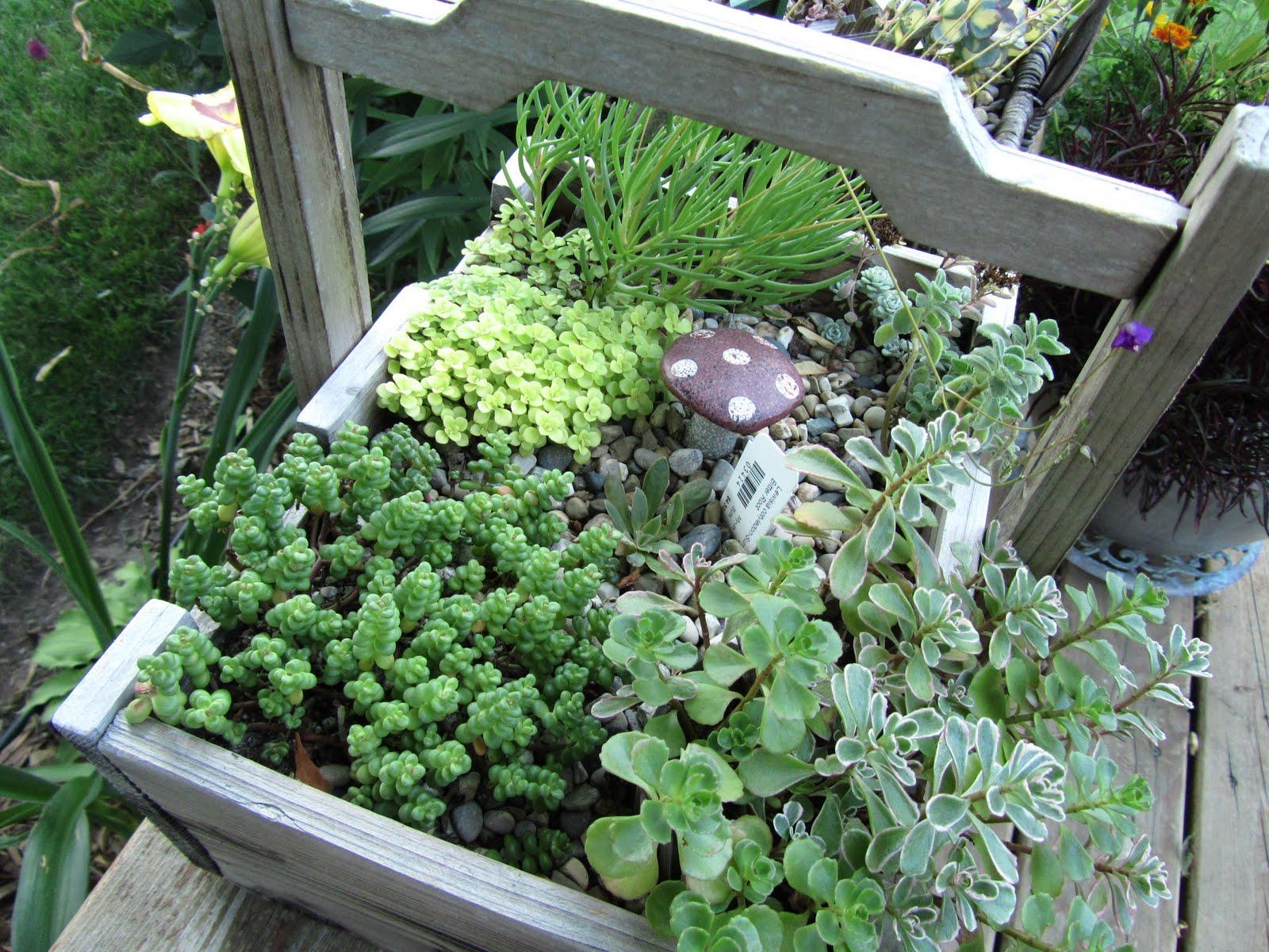 Cheesehead gardening miniature container gardens fairy gardens - Fairy garden containers ...