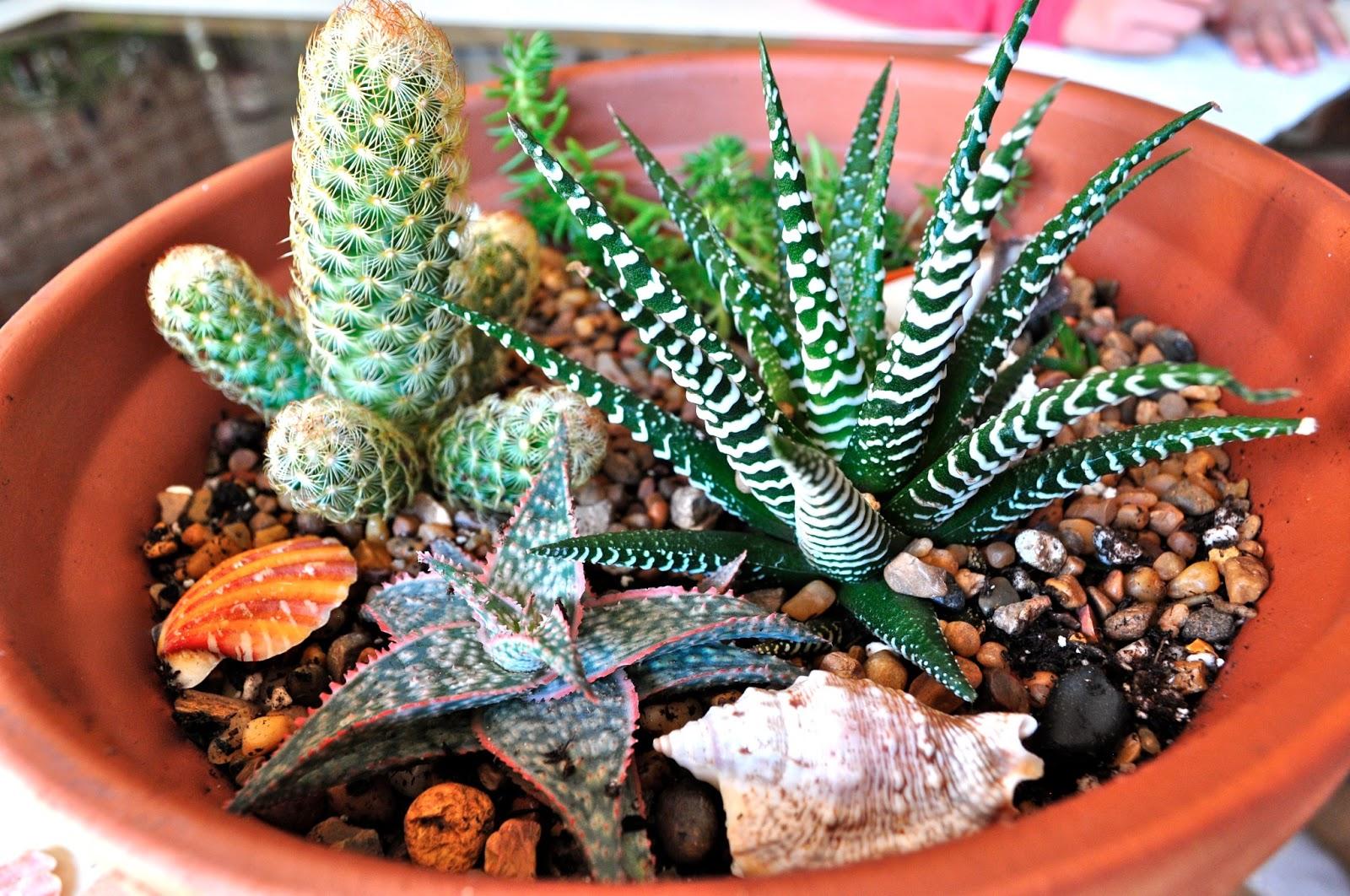 Unusual dish garden ideas ideas garden and landscape for Dish garden designs