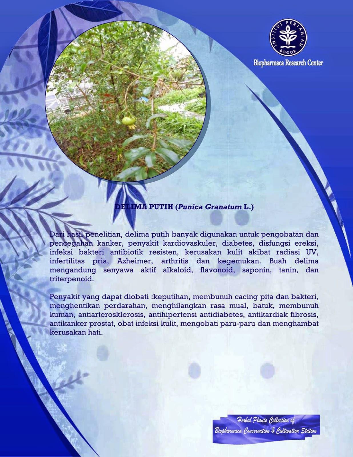Kualitas dan Keamanan Jamu di Indonesia   Pharmacy Story