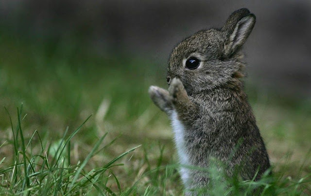 Oh Bravo bunny cute images