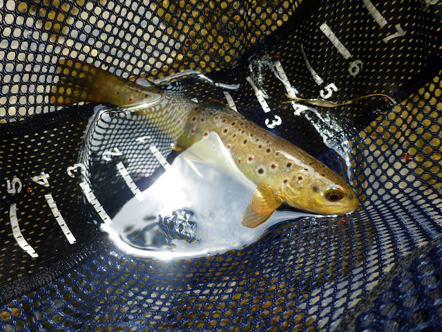 Valley Creek PA Brown Trout