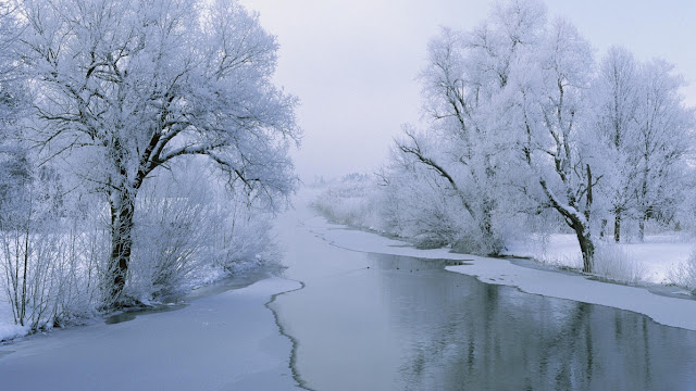 Winter White Wallpaper
