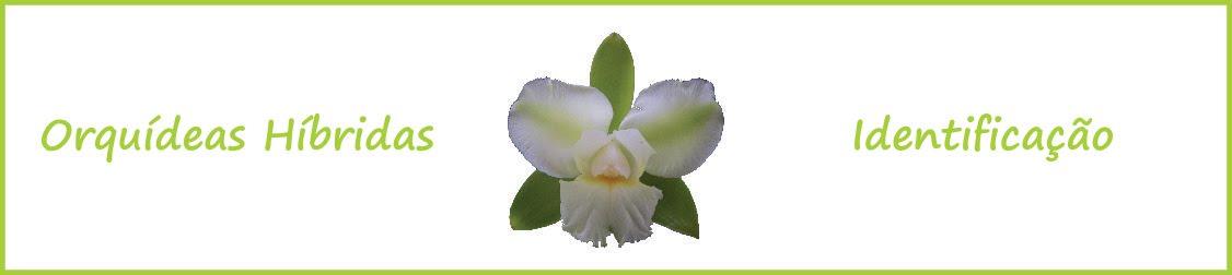 Orquideas Híbridas - Identificação