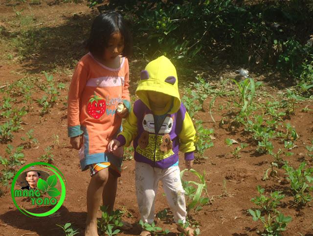 Ajak anak belajar sambil berkebun