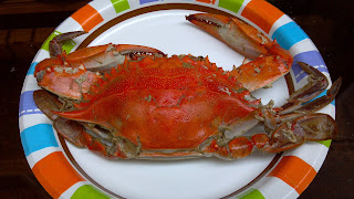steamed maryland blue crab on a plate