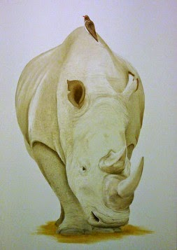Rhinoceros in oil on canvas.  Lucy's Pet portraits for a client in Kenya
