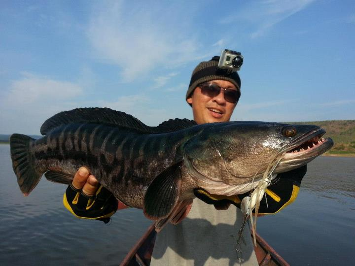What does a snakehead fish look like 10