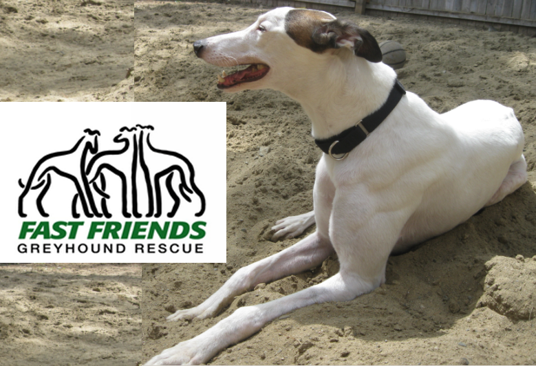 Fast Friends Greyhound Rescue and Adoption Center Blog