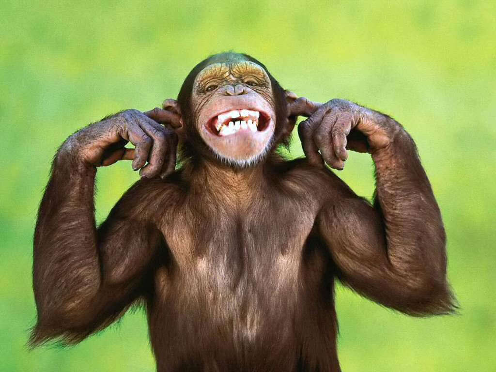 http://2.bp.blogspot.com/-clG6-ql1-AA/T2X7ka-5wvI/AAAAAAAABcc/JXs4ldJJvfk/s1600/funny-monkey-wallpaper.jpg