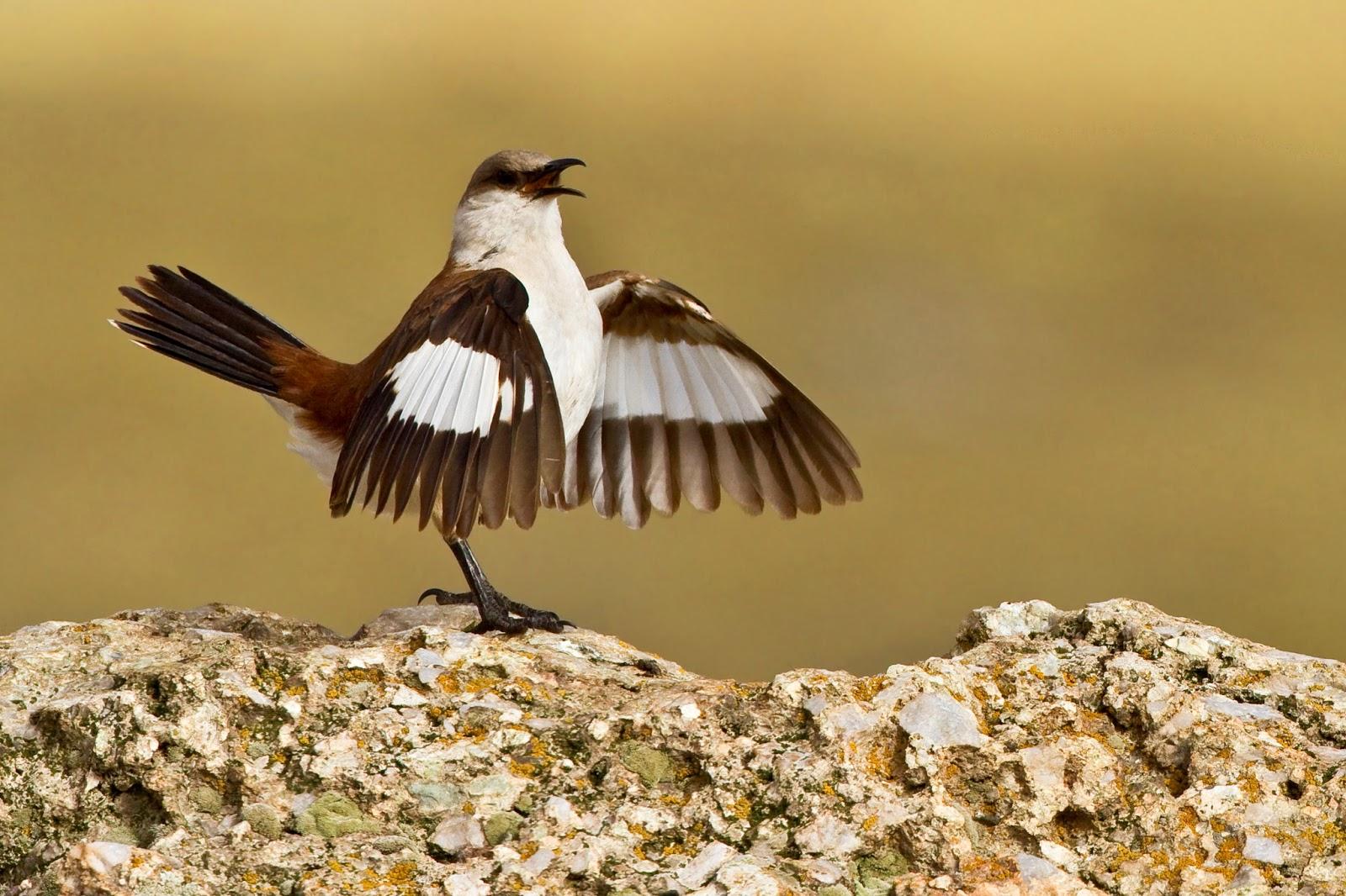 Rare Species Of Birds Birds from Behi...
