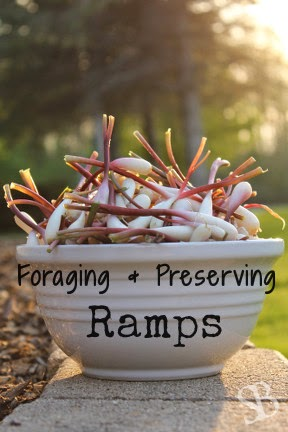 http://www.sustainableblessings.com/2014/06/foraging-and-preserving-ramps.html
