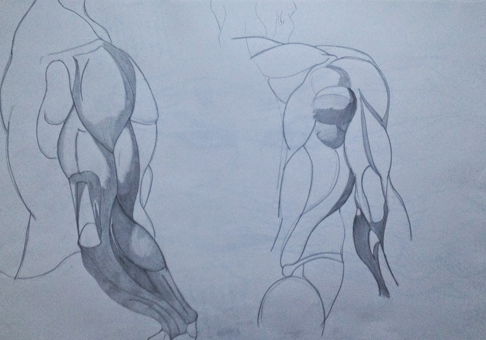 Anatomy Sketch taken from Dynamic Figure Drawing by Burne Hogarth ...