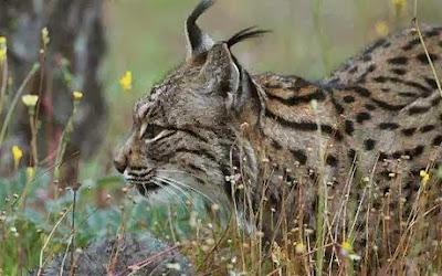 http://kidblog.org/VICTORIAGUERRERO/8b947080-7102-4abf-8d2d-3e0562eb4d94/la-fauna/