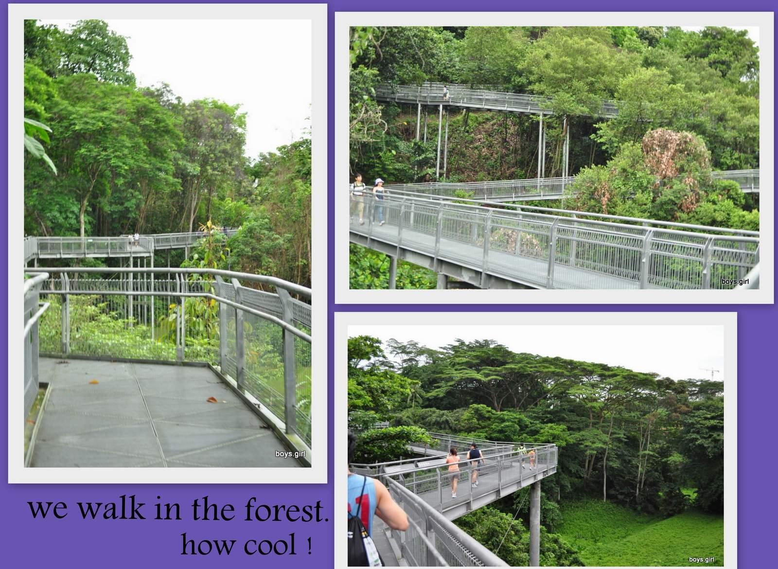 SengkangBabies: Southern Ridges Forest Walk