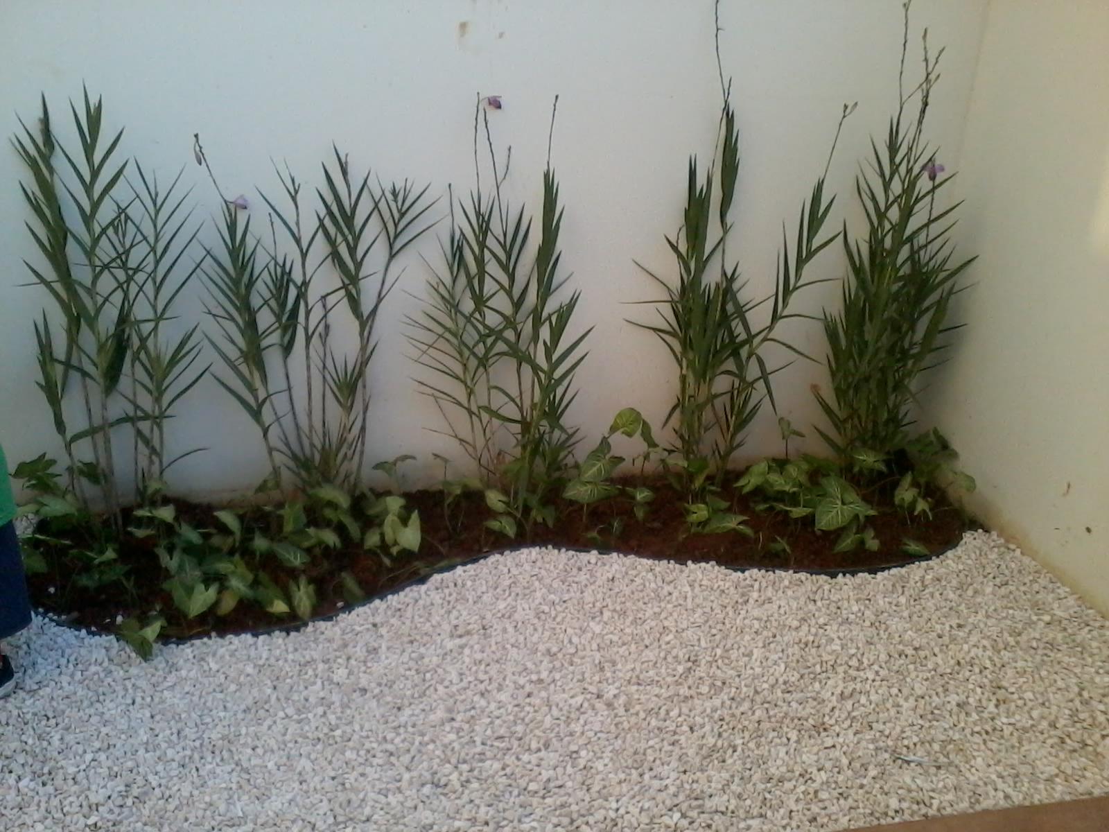 Lavanda plantas - Cuidados planta lavanda ...