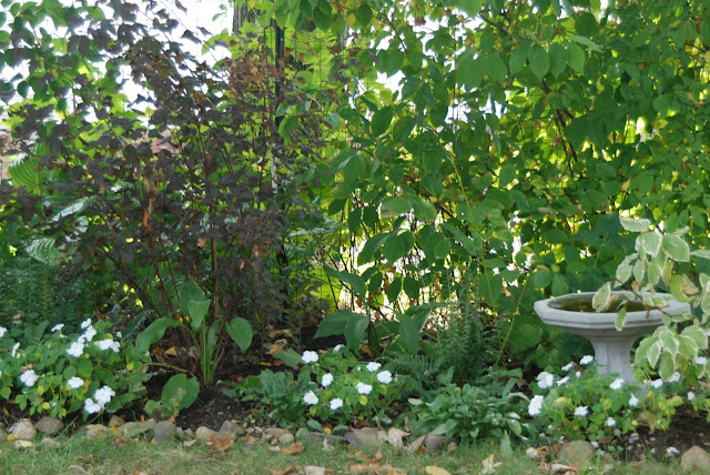 The Woodland Garden still has white and green tranquility.