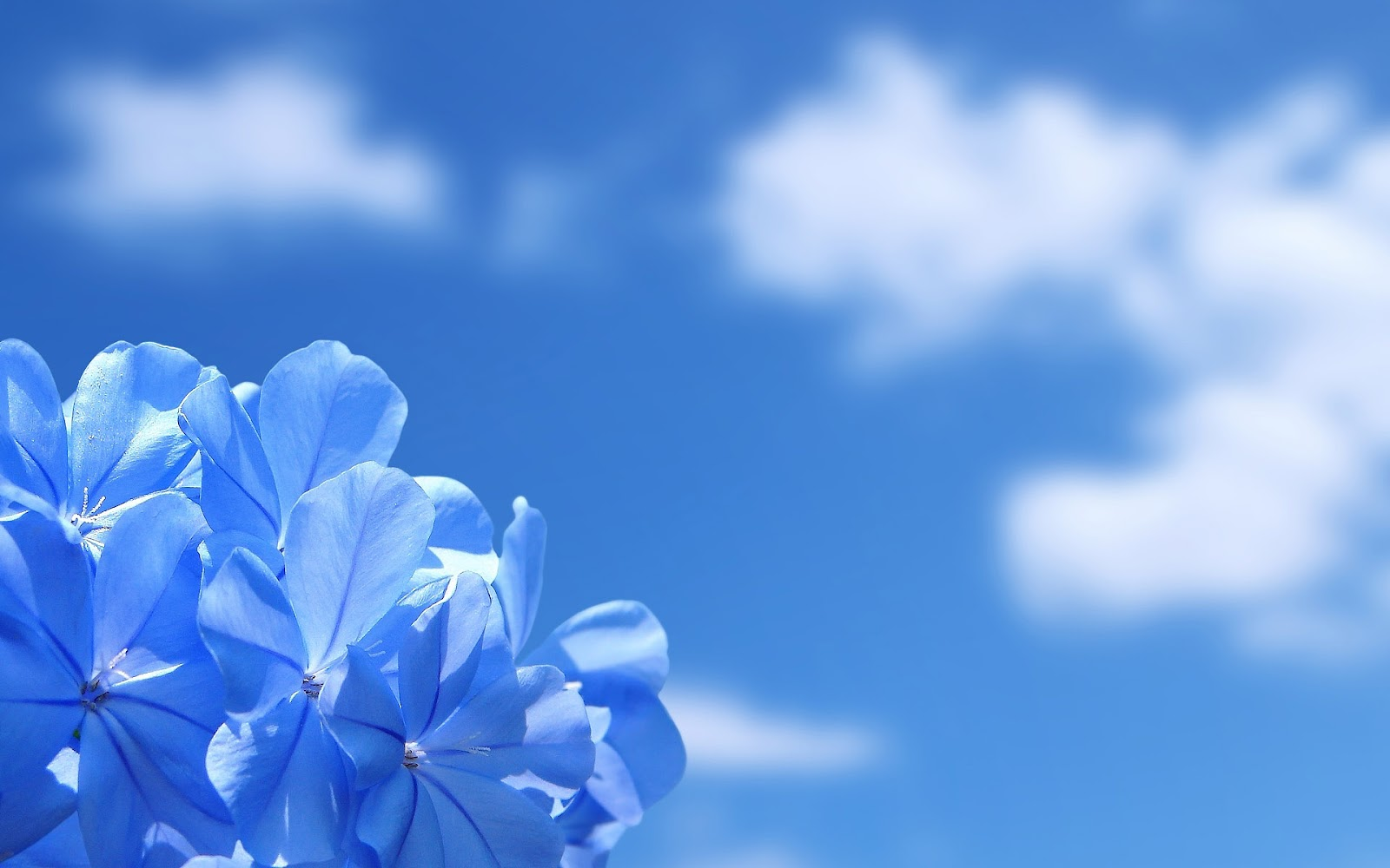 HD Background: Blue Wallpapers - Part1