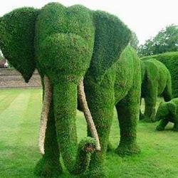 Sculpturi din Plante