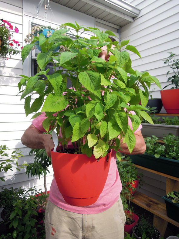 container gardening herbs