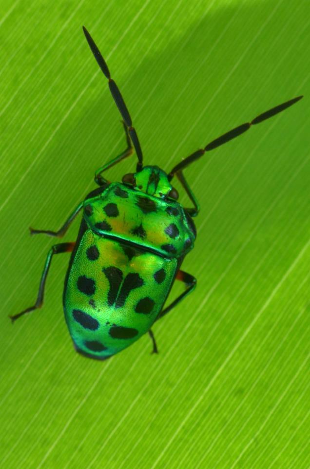 Green Bee Macro