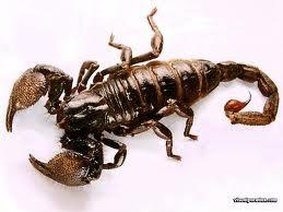 thel kotinaal visam muriya iyarkkai vaithiyam, Natural medicine for scorpion bite poison