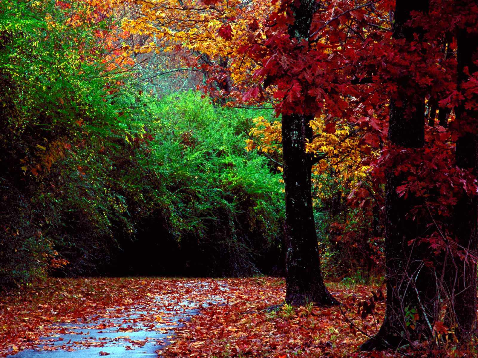 autumn wallpapers widescreen free images fun