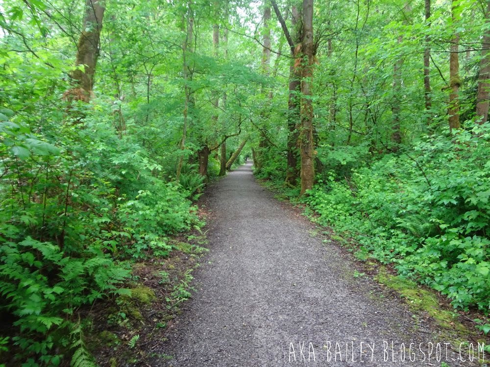 Wooded trail in Pacific Spirit Regional Park