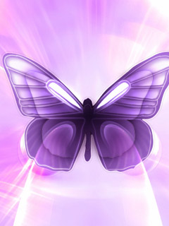 purple butterflies wallpaper funny animal