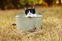 Cat in the Pot 4