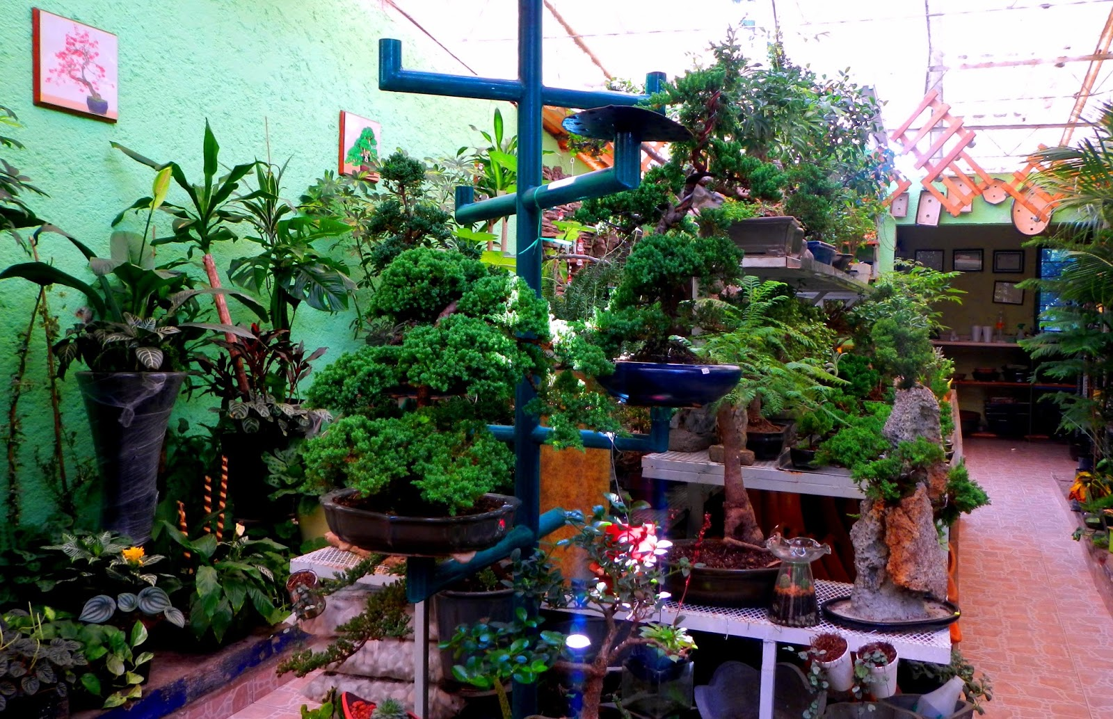 Mercado de plantas viveros de coyoac n for Viveros de plantas en lima