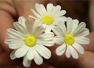 Цветы 0