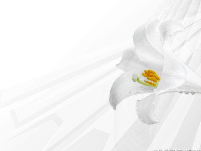 Calla Lily Invitations as beautiful invitations sample