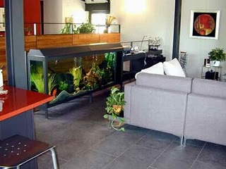 Stylish Fish Aquarium