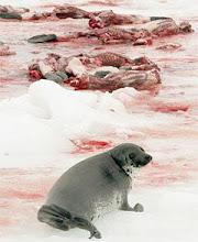"Harpseals Org.  Το βάρβαρο κυνήγι της φώκιας: ΦΘΑΝΕΙ ΠΙΑ !!!! Τα ""φαγατε"" ολα!!!"