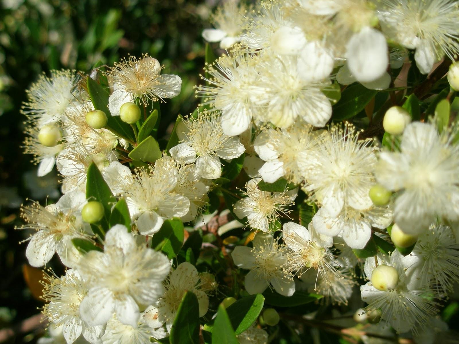 Çiçek Ve Çam Balları Hangi Bakımdan Farklıdır