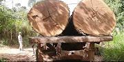 Novo Velho Código Florestal...