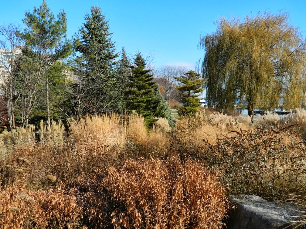 Toronto Music Garden perennials winter structure  Courante section by garden muses-a Toronto gardening blog