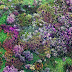 Colorful Nature Photo Gallery
