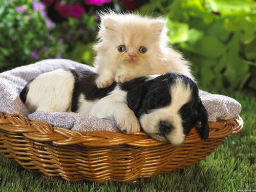 Non Abbandonate Gli Animali Come Far Convivere Cane E Gatto