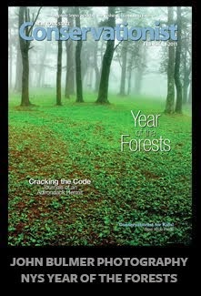The Year of The Forests