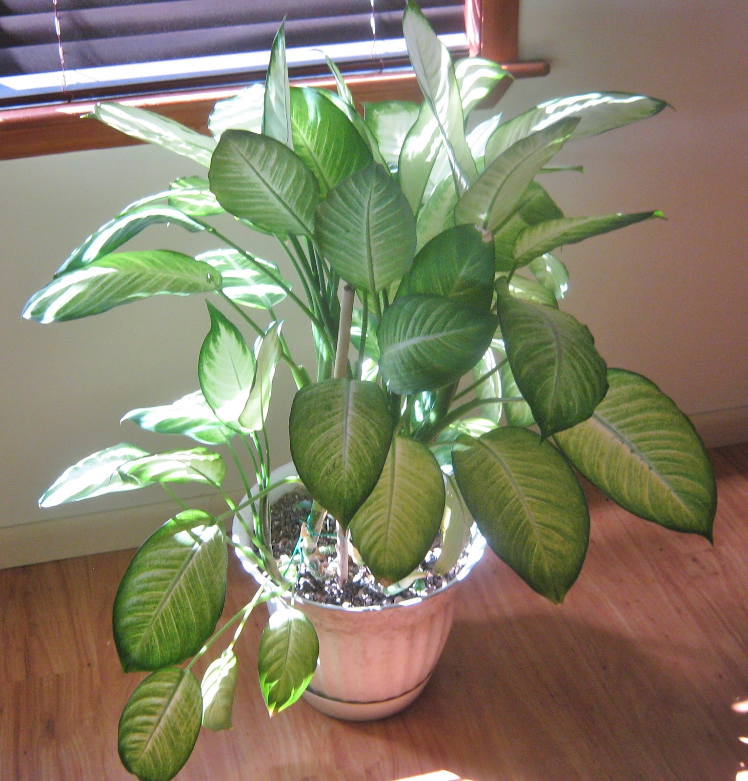 Indoor Plants How Many Needed Per Room For Clean Air
