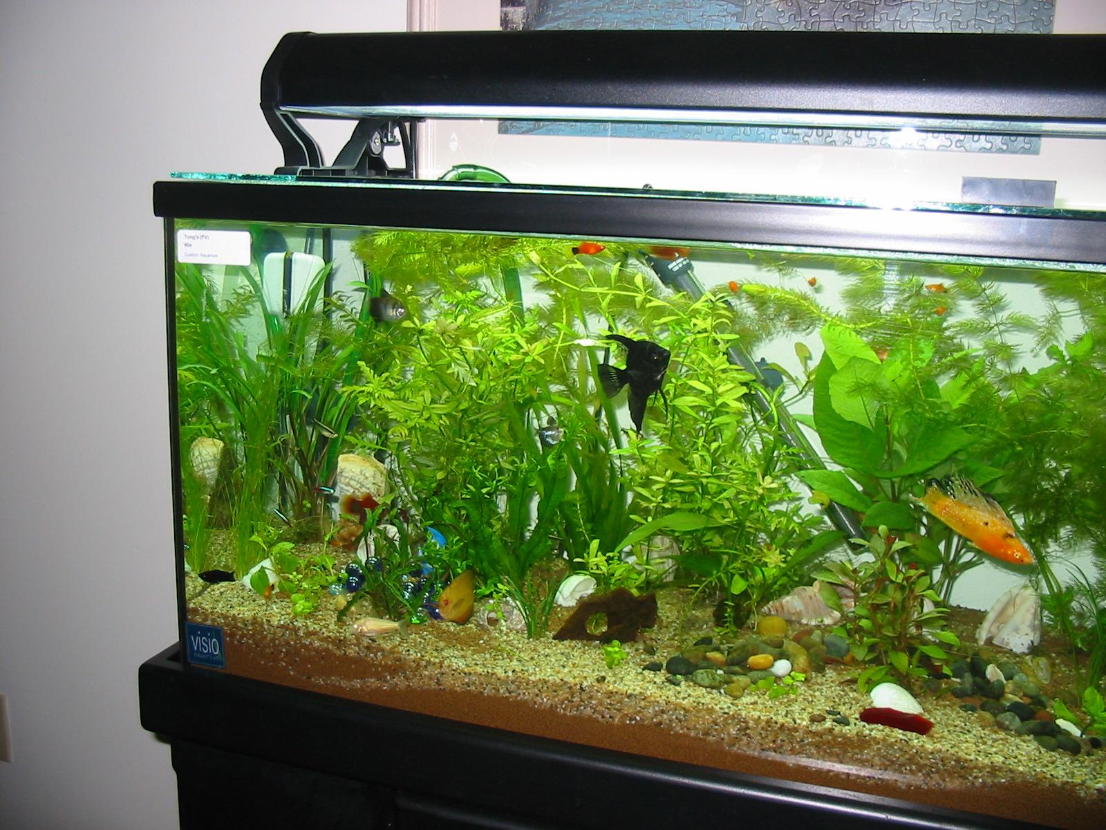 Popular Freshwater Aquarium Fish Types - Basics to Know